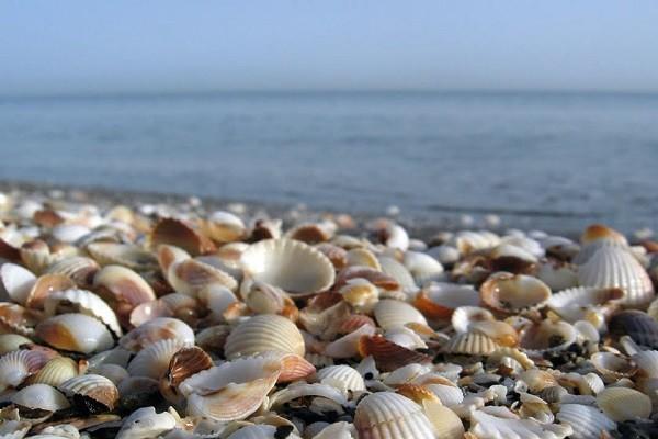 استفاده از صدفهای دریای خزر در حوزه مهندسی
