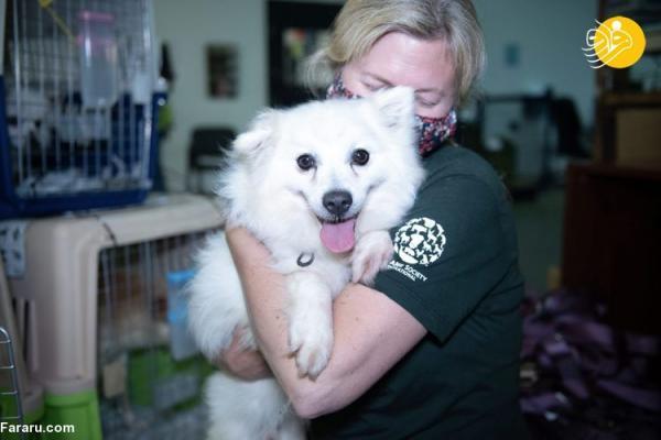 نجات 171 سگ که قرار بود خورده شوند